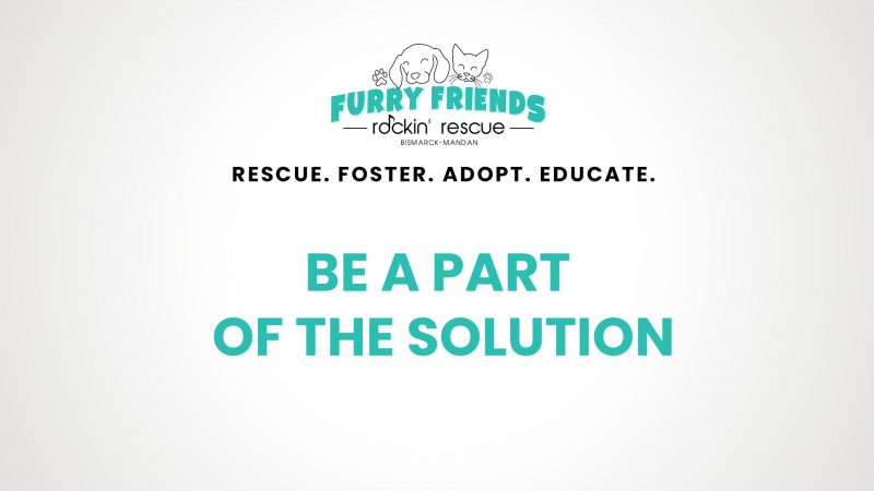 Furry Friends Rockin' Rescue helping pets get adopted