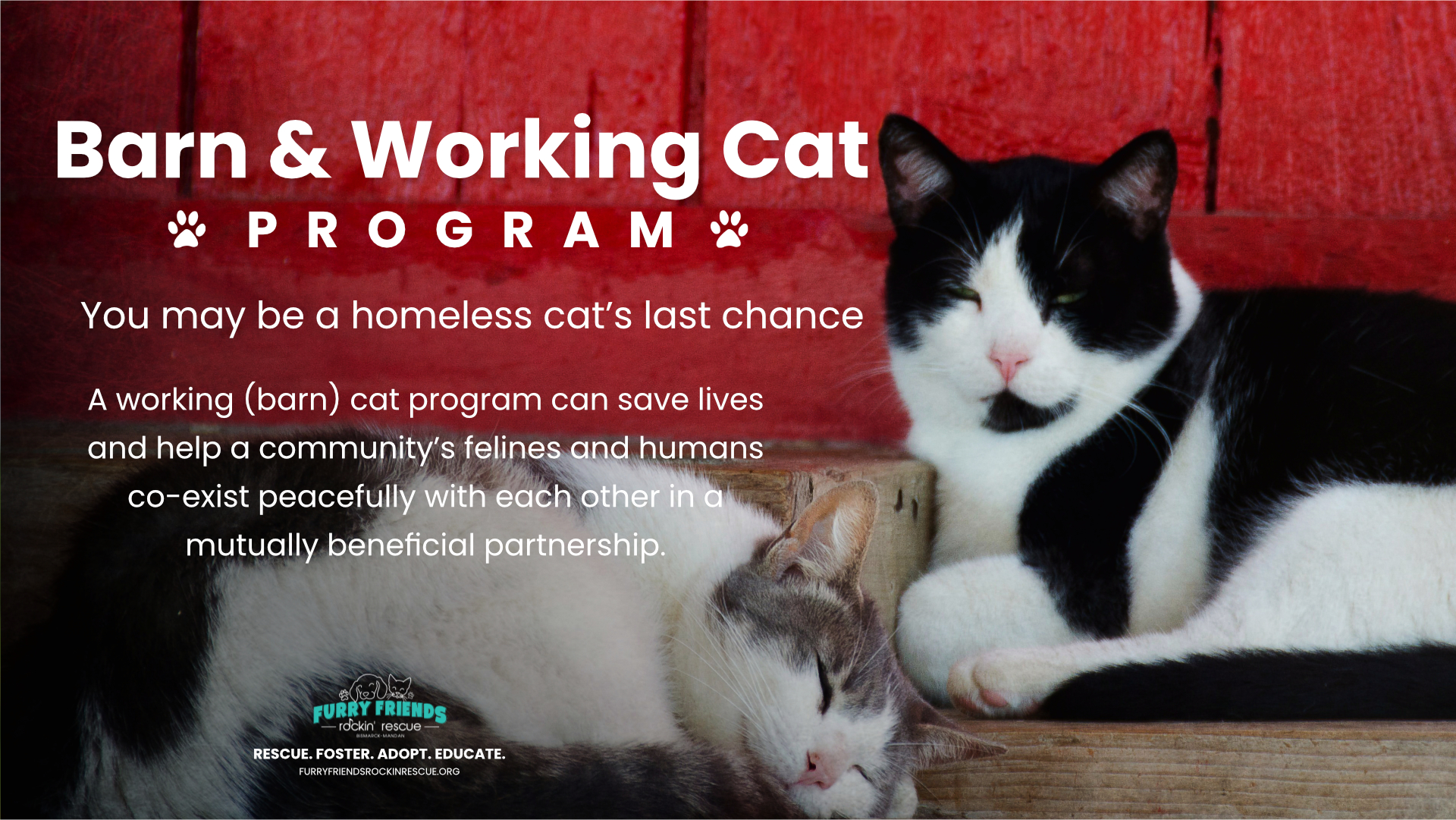 You may be a homeless cat's last chance……. A working (barn) cat program can save lives and help a community's felines and humans co-exist peacefully with each other in a mutually beneficial partnership.